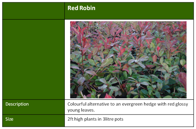 red robbin hedging